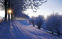 Snow picture nature scenery image