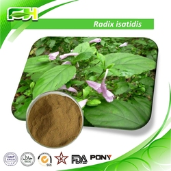 Best Price Radix Isatidis Extract Powder,Radix Isatidis Extract