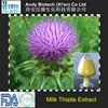 Popular High Quality 80% Milk Thistle Seed Extract / Silymarin