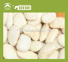 Arabica variété café vert haricots grand blanc haricot blanc haricot