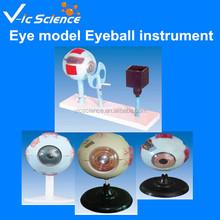 Modèle d'enseignement modèle d'oeil globe oculaire instrument