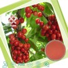 100% Natural Acerola Cherry Extract Powder