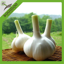 import and export 2015 fresh garlic from china