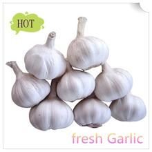 China low price high quality fresh garlic