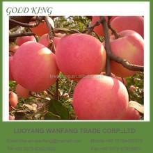 Best Price Fuji Apple / Apple Fruit