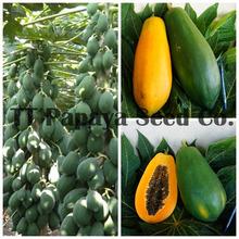 High quality Taiwan papaya seeds for field planting