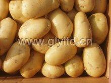 Bangladesh Good Quality Fresh Potato