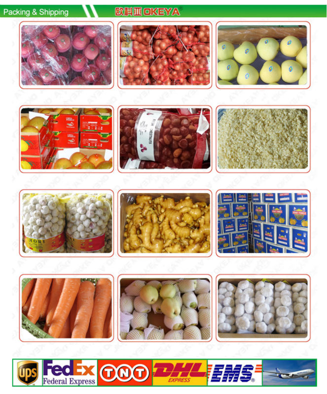 New arrival sweet delicious import fruit vegetable europe