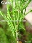 Horsetail p.e. ---- silicic acid