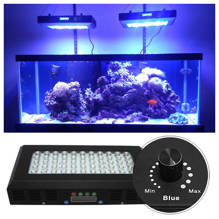 Light Fish Tank Best For Coral Reef Growing - Buy Blue Light Fish Tank ...