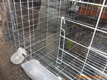 home use poultry cage for pigeons,chickens,quails