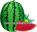 Plantar semillas de sandía mejorar 8th