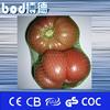 small green vegetable fruit mesh bag wholesale