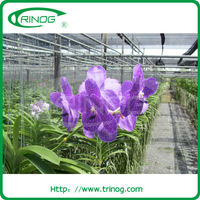 Shading foil greenhouses for orchid flower