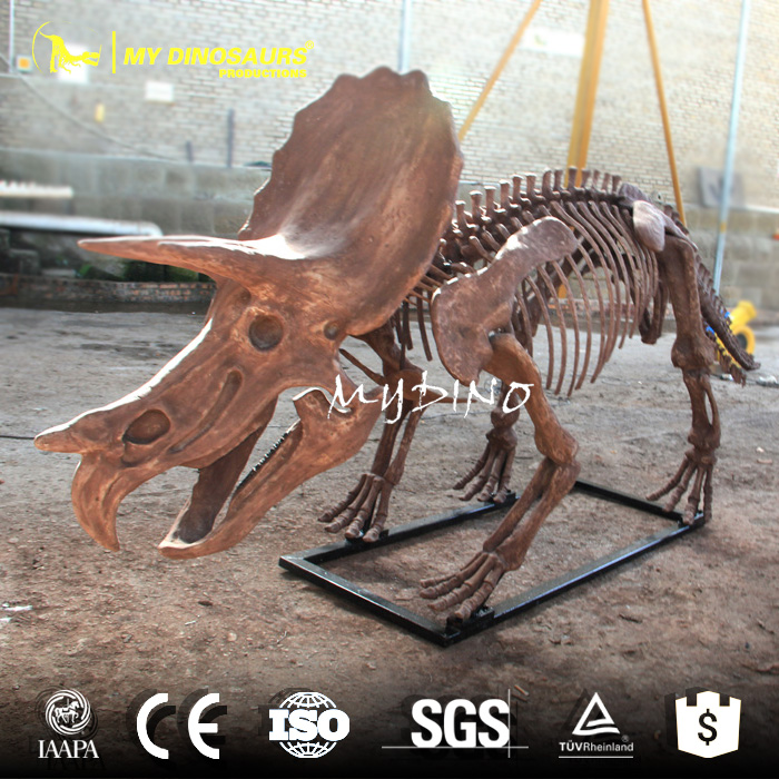 dino skeleton.jpg
