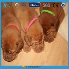 Hot selling nylon Whelping puppy dog collar ID collar 12 colors