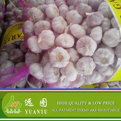 Fresh Garlic/Bulk Packing Wholesale Fresh Garlic For Exporting