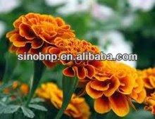 GMP Manufacturer Supply 100% Natural Marigold P.E.