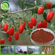 100% natural herbal plant 10:1 20% - 60% goji berry extract powder