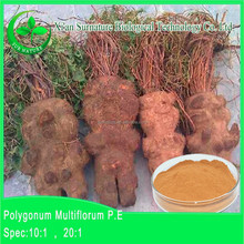 GMP supply Multiflora Fallopia Powder/Fallopia Multiflora Extract/Polygonum Multiflorum