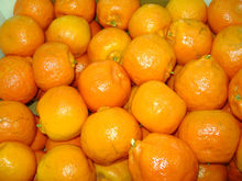 Egypt Fresh Citrus Fruit