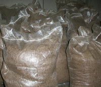 best 9501 hybrid paulownia tree seeds with certificate