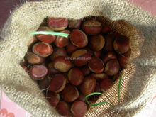 2015 new crop of fresh chestnut from China packing in gunny bag