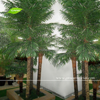GNW APM024 palm tree seeds palm tree plants green palm tree leaves for sale