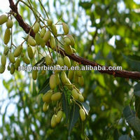 High purity neem oil 5% azadirachtin