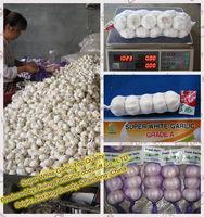 Chinese Fresh Pure White Garlic/Snow White Garlic/Super White Garlic