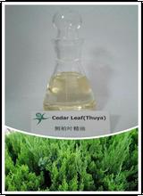 natural plant extract Platycladus orientalis leaf essential oil