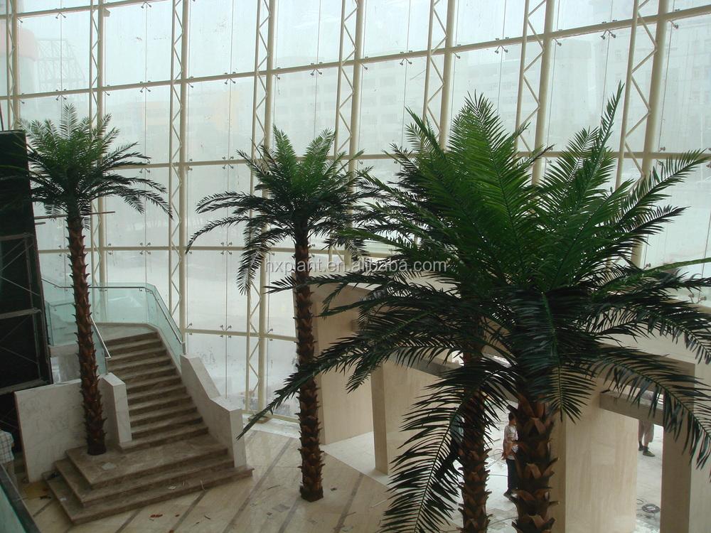 Big Leaf Palms Big Leaves Kwai Palm Tree