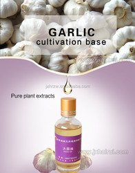 pickled garlic in oil, Pure garlic seed oil