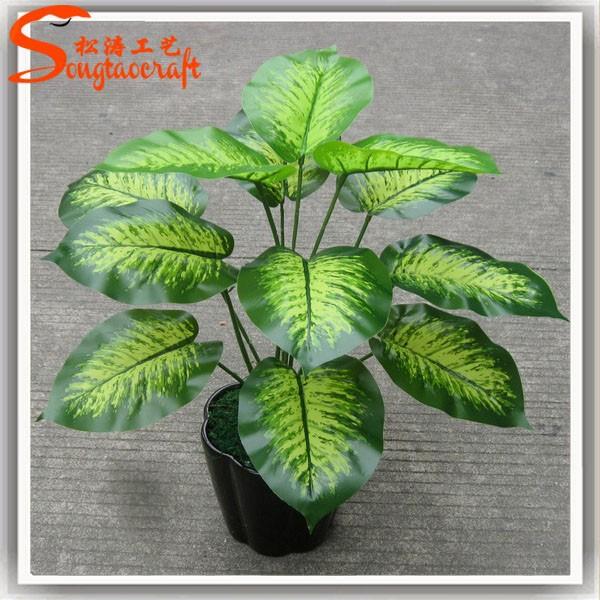 Ornamental indoor plants with names - Indoor plants names ...