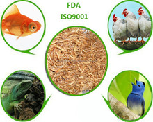 Freeze dried innovative food chicken feed mealworm // fish feed mealworm