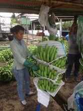 Ecuadorian Bananas