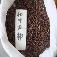 Hong ye shi nan zhong zi export seeds for photinia serrulata seed