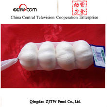 High Quality Chinese Garlic Factory / Fresh Garlic Farm