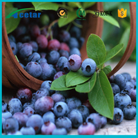 Pure organic herbal extract bilberry powder health care bilberry plants for sale high quality bilberry extract
