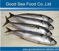 Frozen seafrozen IQF pacific mackerel