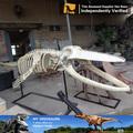 Mi dino- ballena artificial bio modelo de esqueleto