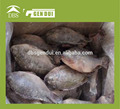 Frozen peces Tilapia Whole ronda venta