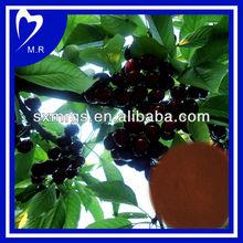 Natural Black Cherry Extract Powder 10:1
