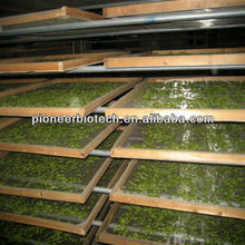 Natural organic Tea saponin,used for pharmaceutical and food