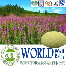 Hot sale Epilobium angustifolium extract/Willow Herb Extract/Fireweed Extract plant extract