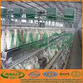 las aves de corral jaula de cría de pollo