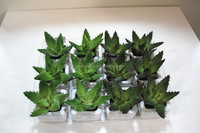 artificial Aloe bonsai /mini bonsai plant /fake plant on sale in china