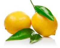 BNP professional supply GMP&Kosher 100% Natural high quality Lemon Seed Extract 98% Limonin