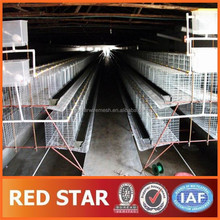Automatic Chicken Cage for Growing Broilers and Pullets(30 Years Factory CE,SGS,ISO9001)