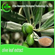 olive leaf extract/olive leaf powder in hot selling